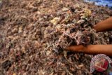 KNS Baubau ikut diklat pengolahan rumput laut