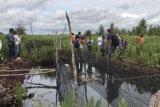 CIFOR Studying Effectiveness Of Peatland Restoration In Riau