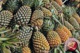 Nanas segar Indonesia masuki pasar Italia
