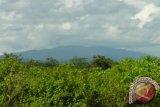 Pemprov ingin pangkas luasan kawasan hutan di Kalteng
