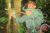 Taman Nasional Kerinci Seblat Memusnahkan Jerat Rusa