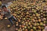 Jelang Seminar Kelapa Internasional, Pemkab Inhil Matangkan Berbagai Persiapan