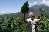 Ganjar: Tungguk Tembakau Bisa Jadi Agenda Wisata