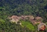 Hutan di Sumbar aman, lepas dari Situs Warisan Dunia Dalam Bahaya