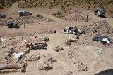 Fosil Hewan Berusia 350 Ribu Tahun Ditemukan Di Turki