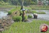 Distan Minahasa Tenggara verifikasi 700 kelompok tani