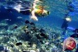 Wisman Tiongkok Kagumi Keindahan Laut Bunaken