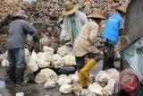 Indonesia mulai kurangi ekspor karet 98.160 ton tindaklanjut kesepakatan AETS