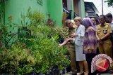 DKP Makassar sempurnakan program Lorong Garden