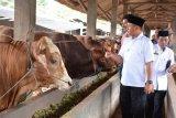 Lampung Tengah Jadi