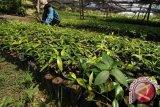 Majene galakkan program revolusi hijau