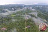 Walhi Sumsel ajak semua pihak lindungi hutan