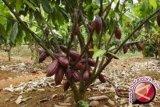 Kalla Group - Lonawe Utara jalin kemitraan investasi kakao