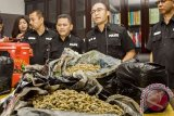BNN Provinsi Bali cegah peredaran narkotika jenis