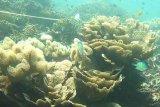Indonesia gali potensi Natuna sebagai geopark dunia