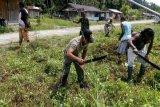 Babinsa Yapen Timur dampingi petani asli Papua tingkatkan hasil pertanian