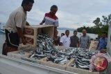 DKP berdayakan 84 nelayan terdampak tsunami Donggala