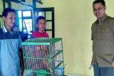 Waduh! Seorang Anak Diamankan Ingin Jual Kukang di Medsos