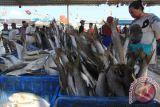 Olahan ikan bisa penuhi gizi dan cegah stunting