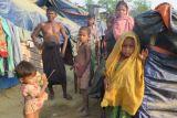 Kanada siap menampung pengungsi Rohingya