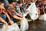 Pemkab Bengkalis Terima Bantuan 50.000 Bibit Ikan Baung Dari Pemprov