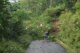 Potensi angin kencang, warga diimbau pangkas pohon rawan tumbang