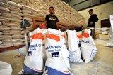 Bulog DIY masih gencarkan OP beras medium