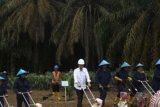 Replanting Program Covers 30.000 Hectares of Riau's Oil Palm Plantations
