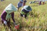 Petani Muba dibekali pendidikan pengendalian hama