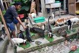 Polisi ungkap pelaku pemakan kucing di Kemayoran