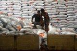 Sebanyak 500 ton beras tak layak konsumsi di Bulog