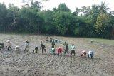 Kodim 0731 melakukan gerakan tanam padi di Lendah