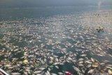 Agam kurangi KJA milik investor tekan pencemaran Danau Maninjau