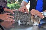 Pemerintah koordinasikan pembentukan pusat kesehatan hewan Asean