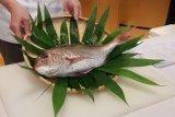 Ikan Tai dari Jepang biasa dikonsumsi mentah