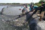 Dinas Perikanan upayakan penghasilan nelayan lebihi UMK