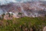 Wildfire Razes 5 Hectares of Peatland Area in Siak District