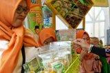 Pangkep kembangkan penganan kemasan dari jeruk lokal