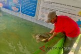Tourists Can Enjoy S Pesisir Tourism Object by Spending Less Than Rp10,000