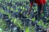 Nilai tukar petani Riau naik tipis tapi masih defisit, begini penjelasannya