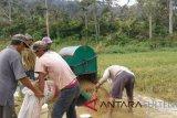 Luas panen padi di parigi moutong 5.787 hektare