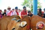 Dana aspirasi peternakan Lombok Timur rp10 miliar