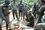 Aktivitas penambangan emas ilegal Dongi-Dongi masih berlangsung