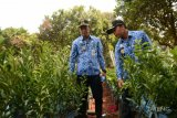 Pemkab Batang siap padukan agrobisnis dan agrowisata