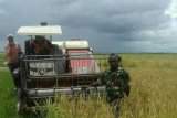 Wakil Menteri Luar Negeri PNG jajaki peluang pembelian beras dari Merauke