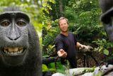 Pengadilan AS: Monyet berswafoto tidak dapat gugat hak cipta