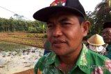 Tahan wereng, petani Banjarnegara diminta gunakan varietas Inpari 33
