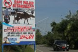 Pengendara melintas di samping spanduk sapi wajib ditangkap bila menggangu ketertiban lalu lintas yang terpajang di Jalan Lintas Banda Aceh-Tapak Tuan, Panga, Aceh Jaya, Aceh, Selasa (10/4). Satlantas Polres Aceh Jaya mengeluarkan peringatan sapi wajib ditangkap bila menggangu ketertiban lalu lintas karena dapat membahayakan keselamatan pengguna jalan. (ANTARA FOTO/Syifa Yulinnas/foc/18)