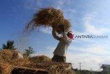 Ribuan petani  Sumut dan Sumbar asuransikan tanaman padinya