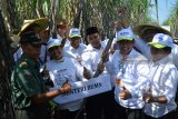 Menteri Badan Usaha Milik Negara (BUMN) Rini Soemarno (kedua kiri) Direktur Utama PTPN X, Dwi Satriyo Annurogo (kedua kanan) Direktur Utama PT Bank Negara Indonesia (BNI) Tbk Achmad Baiquni (ketiga kiri) seusai memanen tebu di perkebunan Nusantara (PTPN) X di Mojokerto, Jawa Timur, Senin (14/5). PG Gempolkrep menargetkan memproduksi 87.503 ton Gula Kristal Putih dengan tebu digiling sebanyak 1.082.200 ton pada musim giling 2018. Antara Jatim/Umarul Faruq/mas/18.